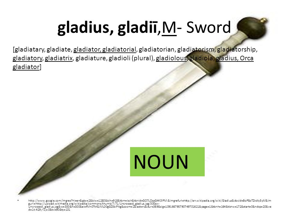 gladius, gladiī,M- Sword http://www.google.com/imgres hl=en&gbv=2&biw=1280&bih=918&tbm=isch&tbnid=GO7LOzpG4K0IPM:&imgrefurl=http://en.wikipedia.org/wiki/Gladius&docid=BoP8oTZkdIy5yM&im gurl=http://upload.wikimedia.org/wikipedia/commons/thumb/7/71/Uncrossed_gladius.jpg/300px- Uncrossed_gladius.jpg&w=300&h=300&ei=fMn0TtKEJML00gGZ5biPAg&zoom=1&iact=rc&dur=369&sig=109166795790749701621&page=1&tbnh=164&tbnw=172&start=0&ndsp=20&ve d=1t:429,r:0,s:0&tx=90&ty=101 [gladiatary, gladiate, gladiator, gladiatorial, gladiatorian, gladiatorism, gladiatorship, gladiatory, gladiatrix, gladiature, gladioli (plural), gladiolous, gladiola, gladius, Orca gladiator] NOUN
