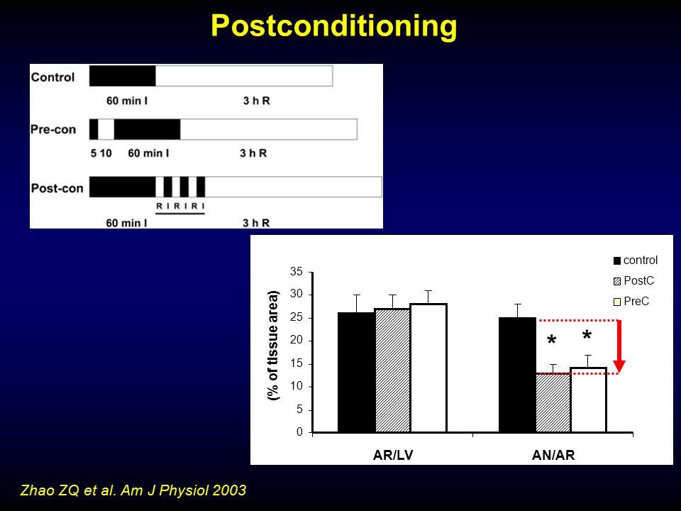 0 5 10 15 20 25 30 35 AR/LV AN/AR (% of tissue area) control PostC PreC * * Zhao ZQ et al. Am J Physiol 2003 Postconditioning