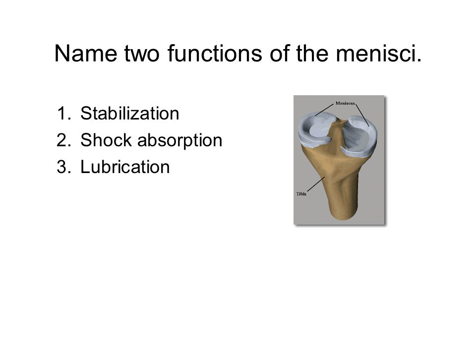 Name two functions of the menisci. 1.Stabilization 2.Shock absorption 3.Lubrication