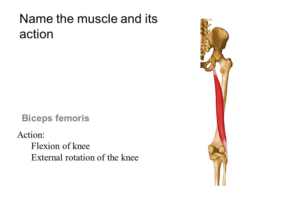 Biceps femoris Action: Flexion of knee External rotation of the knee Name the muscle and its action