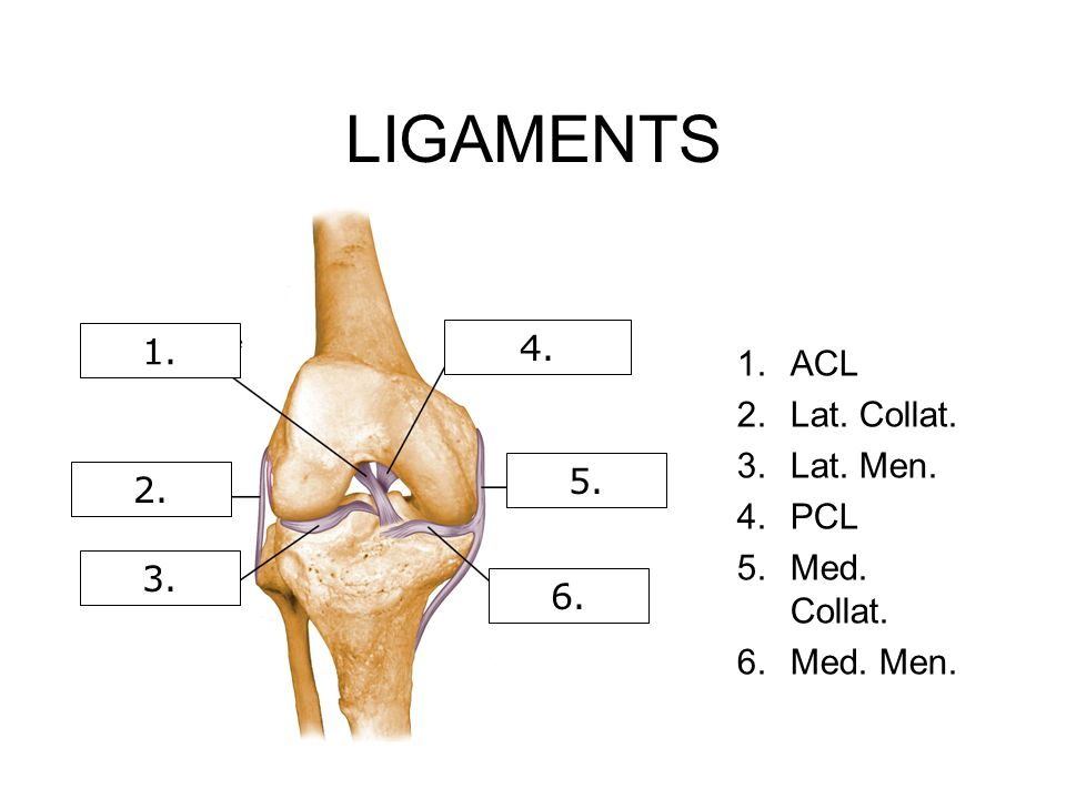 LIGAMENTS 1.ACL 2.Lat. Collat. 3.Lat. Men. 4.PCL 5.Med. Collat. 6.Med. Men. 1. 2. 3. 4. 5. 6.