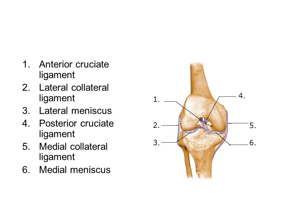 1.Anterior cruciate ligament 2.Lateral collateral ligament 3.Lateral meniscus 4.Posterior cruciate ligament 5.Medial collateral ligament 6.Medial meniscus 1.