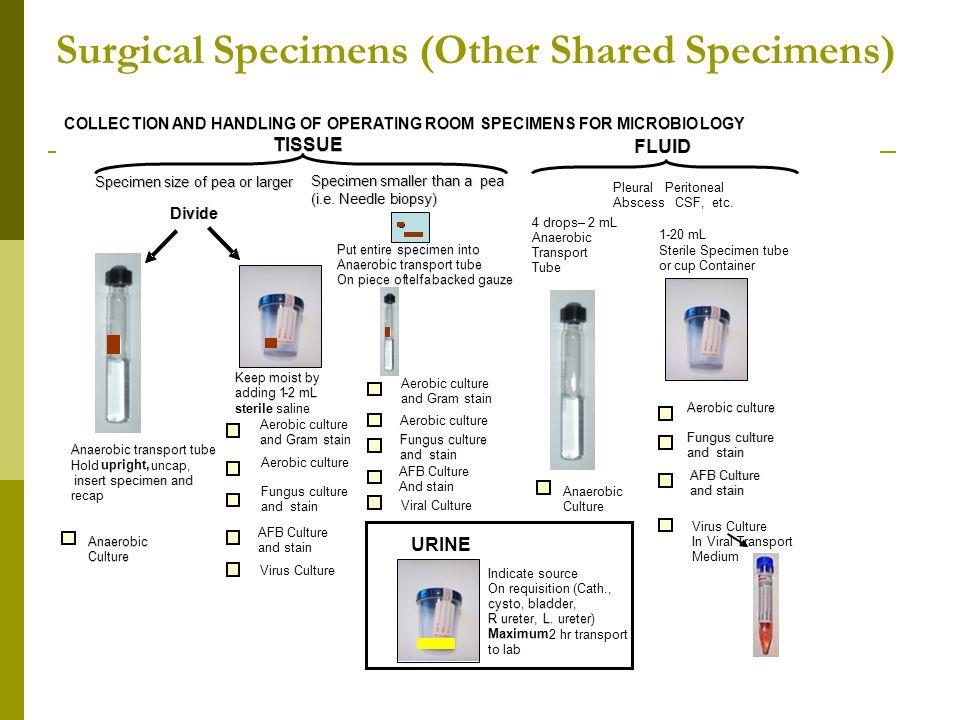 Surgical Specimens (Other Shared Specimens)