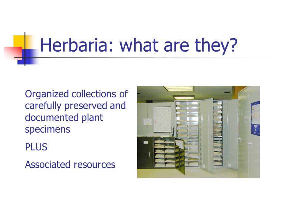 Herbaria: what are they.