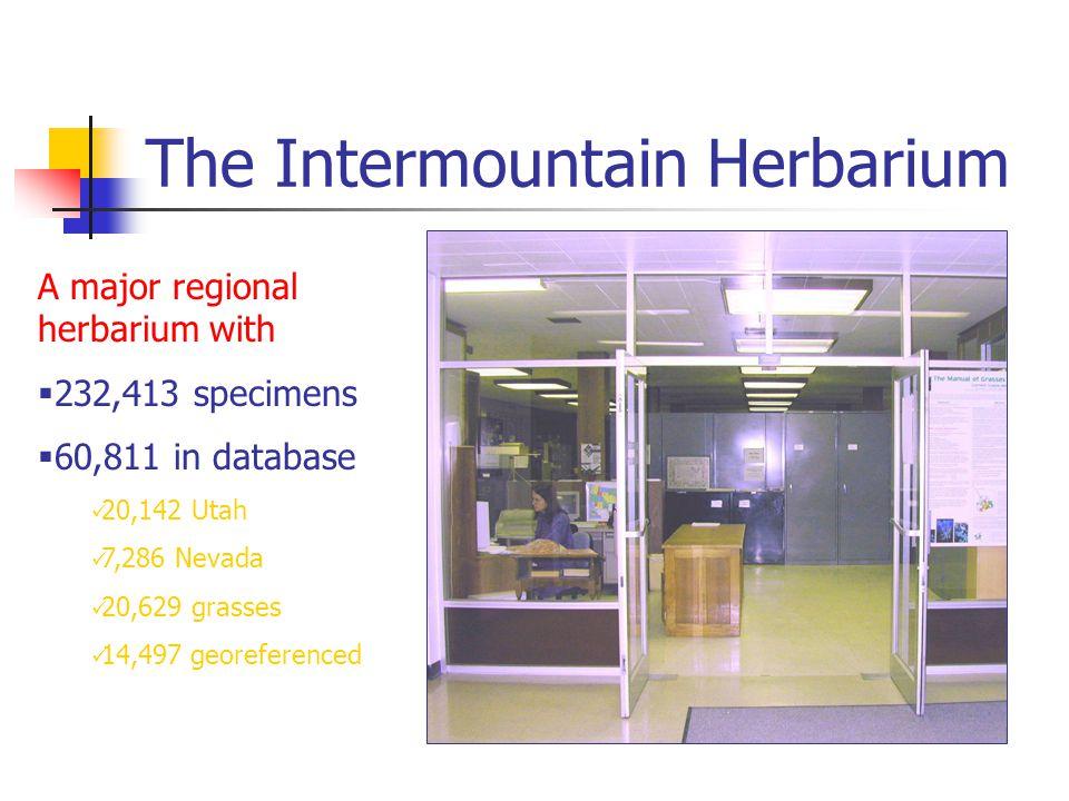 The Intermountain Herbarium A major regional herbarium with  232,413 specimens  60,811 in database 20,142 Utah 7,286 Nevada 20,629 grasses 14,497 georeferenced