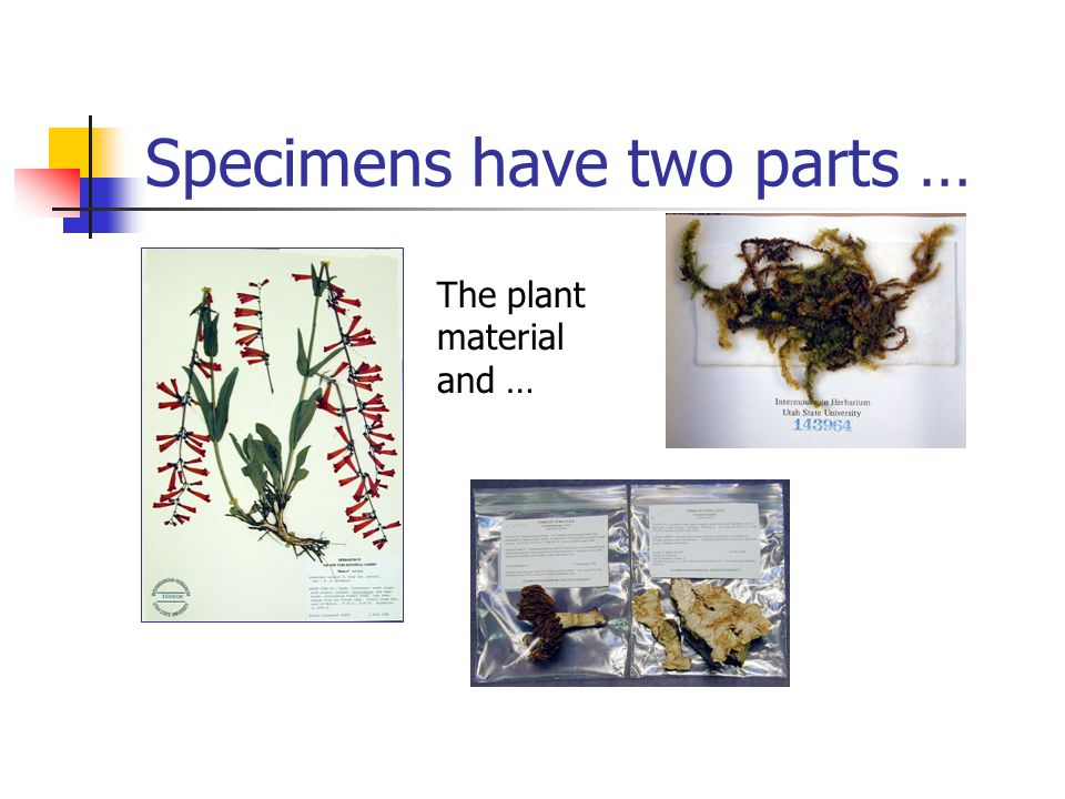 Specimens have two parts … The plant material and …