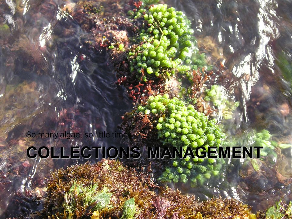 2 Collections Management Permits are required to collect marine organisms in Panama –STRI is covered by a blanket marine collecting permit Land plant/subaerial algae requires different collecting permit –Exporting preserved or live specimens requires separate permits.