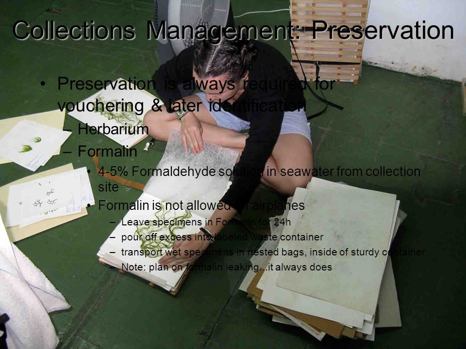 7 Collections Management: Preservation Herbarium preparation corrugated cardboard felt blotter newsprint specimen corrugated cardboard felt blotter newsprint Data recorded in spreadsheet must be recorded on herbarium sheet.