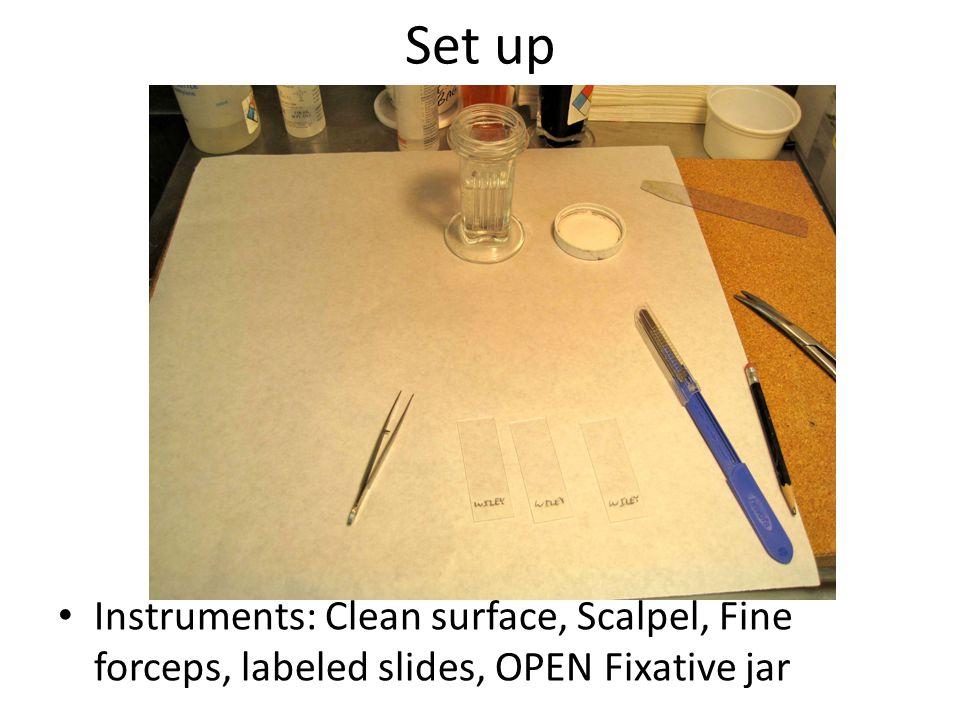 Set up Instruments: Clean surface, Scalpel, Fine forceps, labeled slides, OPEN Fixative jar