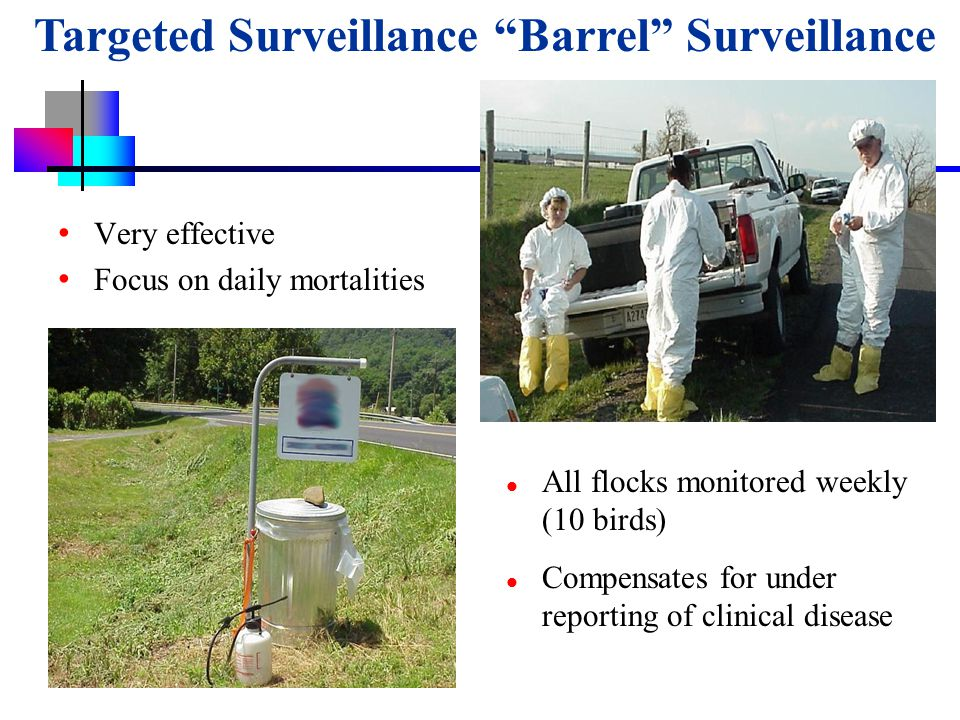 USDA-APHIS Very effective Focus on daily mortalities All flocks monitored weekly (10 birds) Compensates for under reporting of clinical disease Targeted Surveillance Barrel Surveillance