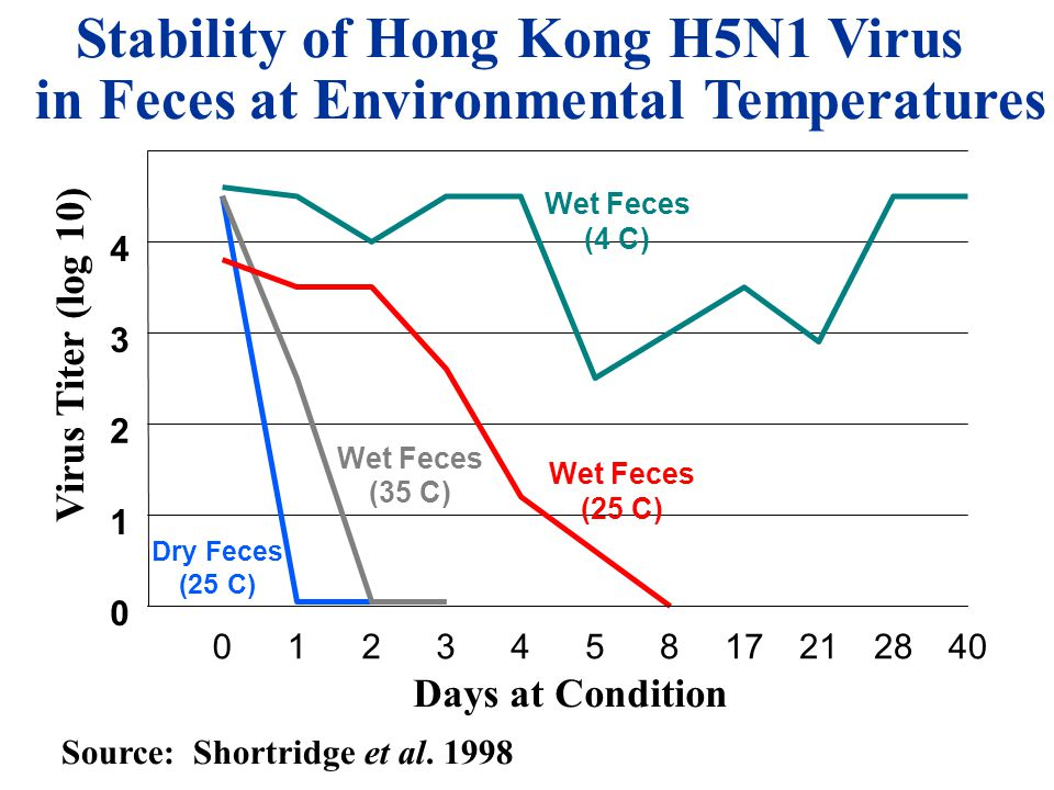 012345817212840 Days at Condition 0 1 2 3 4 5 Stability of Hong Kong H5N1 Virus in Feces at Environmental Temperatures Virus Titer (log 10) Wet Feces (25 C) Dry Feces (25 C) Wet Feces (35 C) Wet Feces (4 C) Source: Shortridge et al.