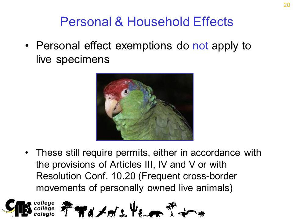 20 Personal & Household Effects Personal effect exemptions do not apply to live specimens These still require permits, either in accordance with the provisions of Articles III, IV and V or with Resolution Conf.