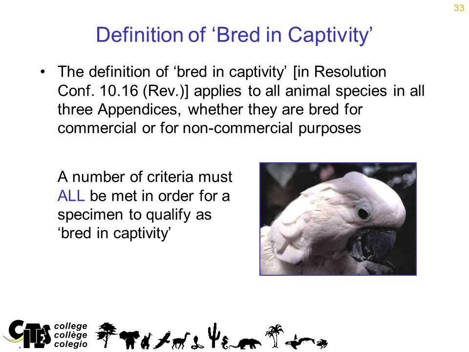 33 Definition of 'Bred in Captivity' The definition of 'bred in captivity' [in Resolution Conf.