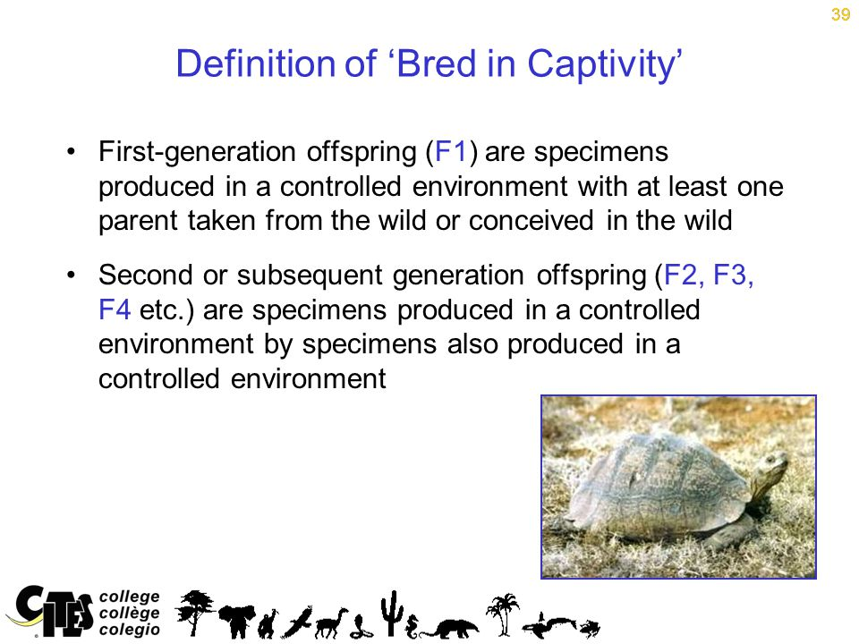 39 Definition of 'Bred in Captivity' First-generation offspring (F1) are specimens produced in a controlled environment with at least one parent taken from the wild or conceived in the wild Second or subsequent generation offspring (F2, F3, F4 etc.) are specimens produced in a controlled environment by specimens also produced in a controlled environment 39