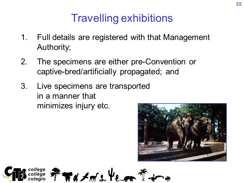 55 Travelling exhibitions 1.Full details are registered with that Management Authority; 2.The specimens are either pre-Convention or captive-bred/artificially propagated; and 3.Live specimens are transported in a manner that minimizes injury etc.
