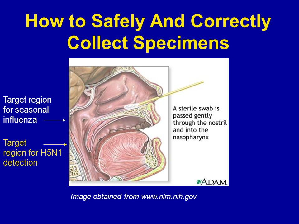 How to Safely And Correctly Collect Specimens Image obtained from www.nlm.nih.gov Target region for seasonal influenza Target region for H5N1 detection