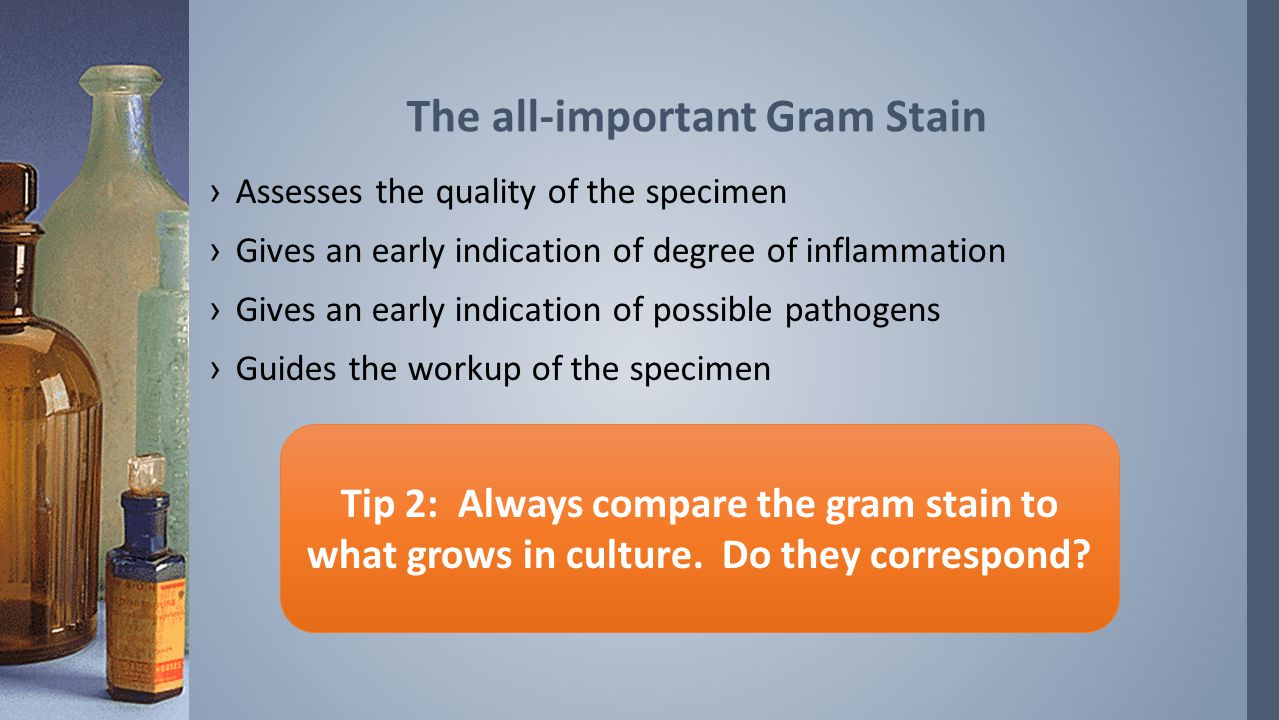 ›Assesses the quality of the specimen ›Gives an early indication of degree of inflammation ›Gives an early indication of possible pathogens ›Guides the workup of the specimen The all-important Gram Stain Tip 2: Always compare the gram stain to what grows in culture.
