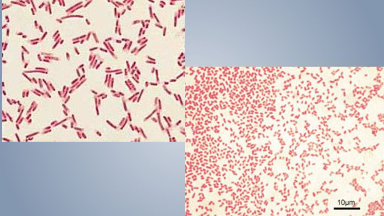 CDC Recognized pathogen from one or more blood cultures.