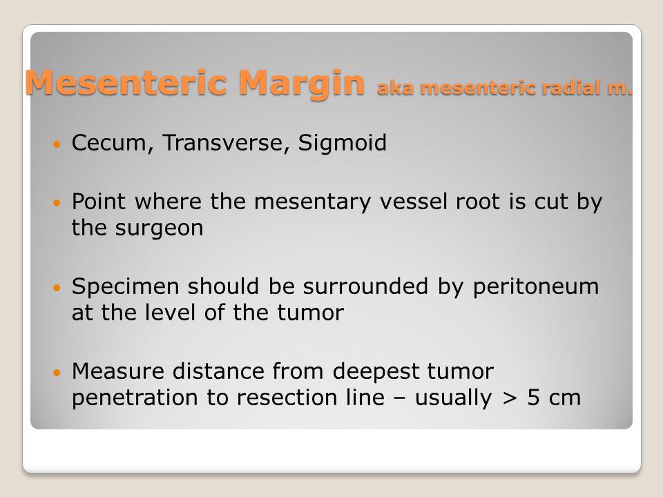 Mesenteric Margin aka mesenteric radial m.