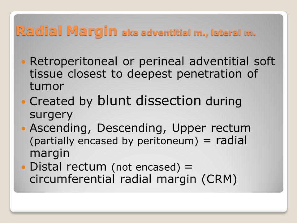Radial Margin aka adventitial m., lateral m.