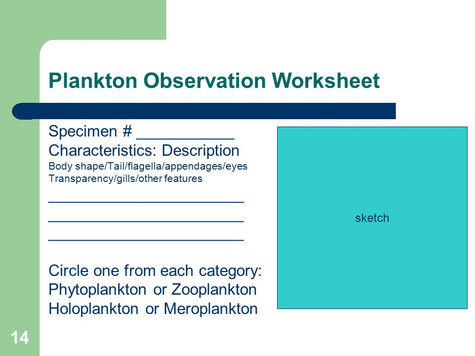 Plankton Observation Worksheet Specimen # ___________ Characteristics: Description Body shape/Tail/flagella/appendages/eyes Transparency/gills/other features ______________________ Circle one from each category: Phytoplankton or Zooplankton Holoplankton or Meroplankton sketch 14