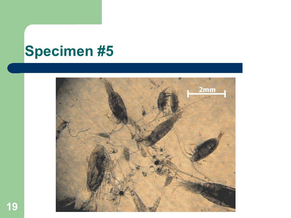 Specimen #5 19