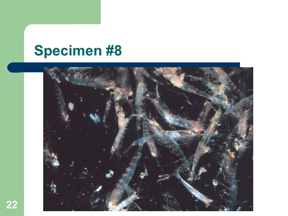 Specimen #8 22