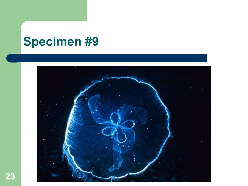 Specimen #9 23