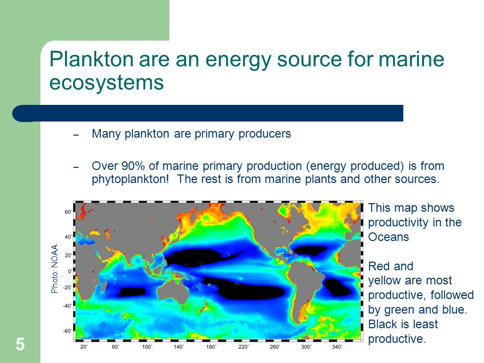 Plankton are an energy source for marine ecosystems – Many plankton are primary producers – Over 90% of marine primary production (energy produced) is from phytoplankton.