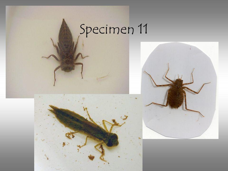 Specimen 11