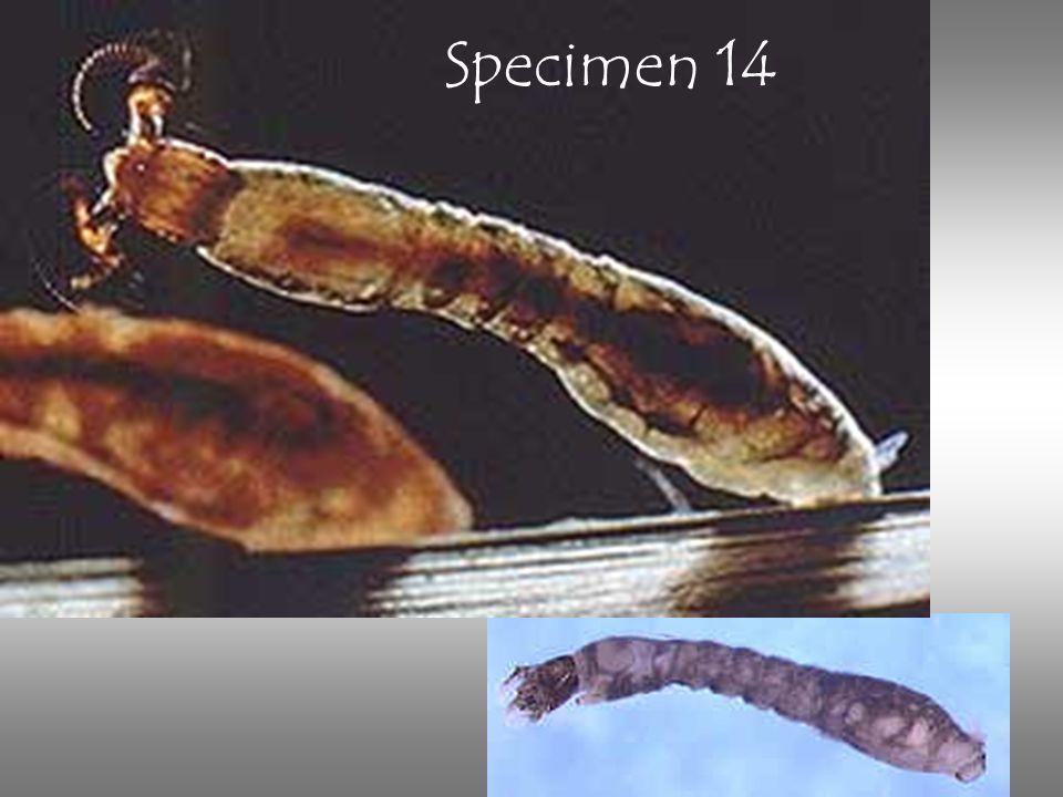 Specimen 14