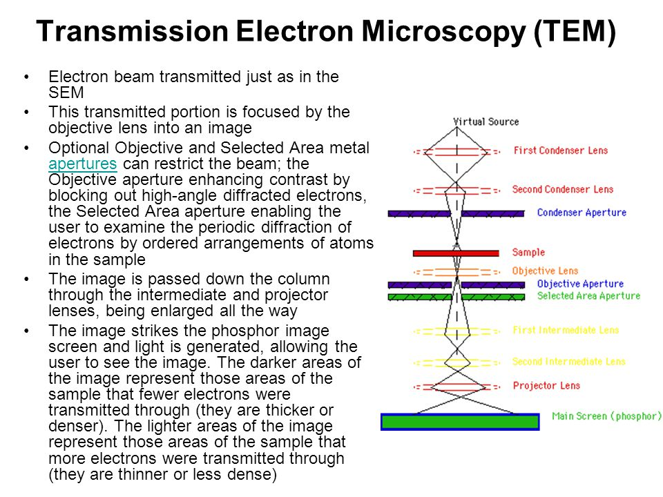 Transmission Electron Microscopy (TEM) Electron beam transmitted just as in the SEM This transmitted portion is focused by the objective lens into an
