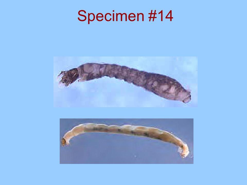 Specimen #13