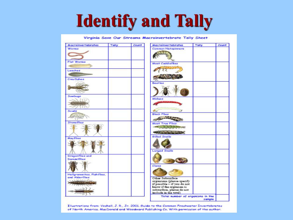 Interpreting Benthic Data Benthic macroinvertebrates can be classified according to their sensitivity and tolerance to water pollution.