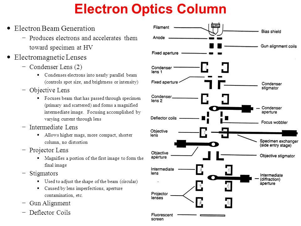 Electron Optics Column  Electron Beam Generation −Produces electrons and accelerates them toward specimen at HV  Electromagnetic Lenses −Condenser L