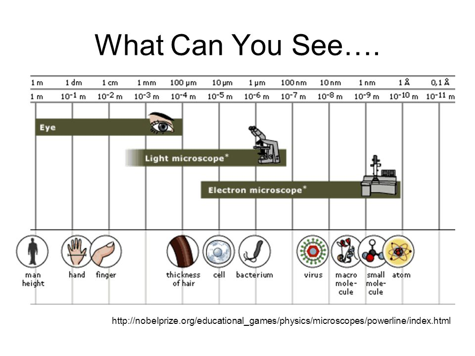 What Can You See…. http://nobelprize.org/educational_games/physics/microscopes/powerline/index.html