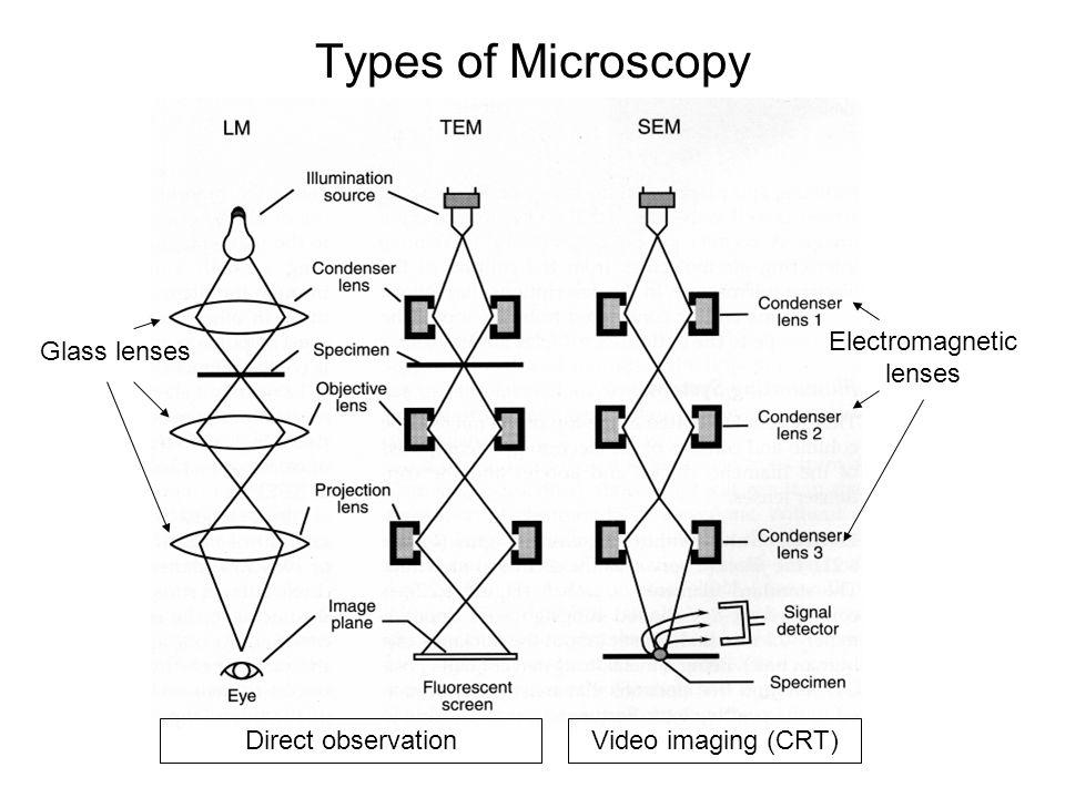 Types of Microscopy Electromagnetic lenses Glass lenses Direct observationVideo imaging (CRT)