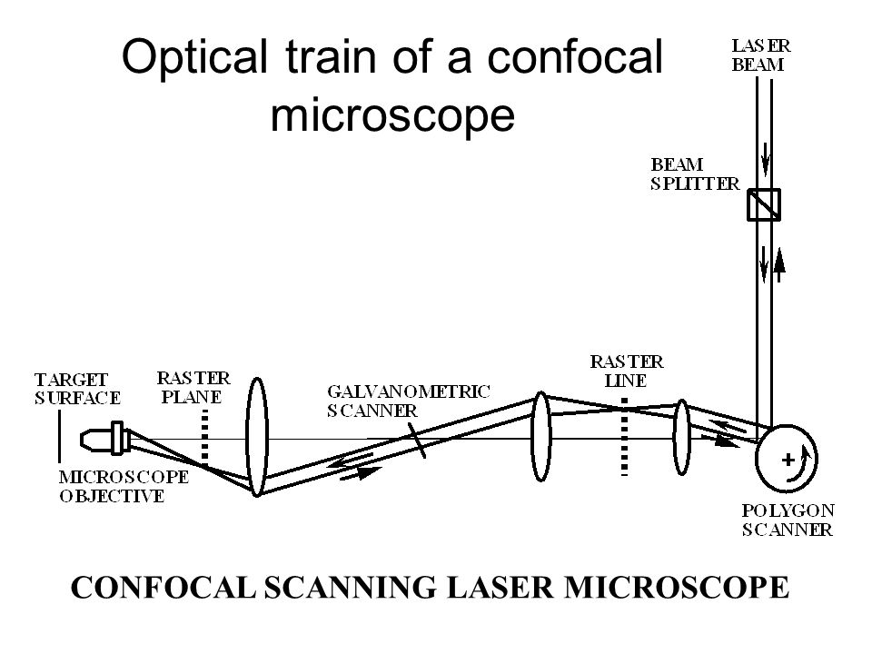 CONFOCAL SCANNING LASER MICROSCOPE Optical train of a confocal microscope