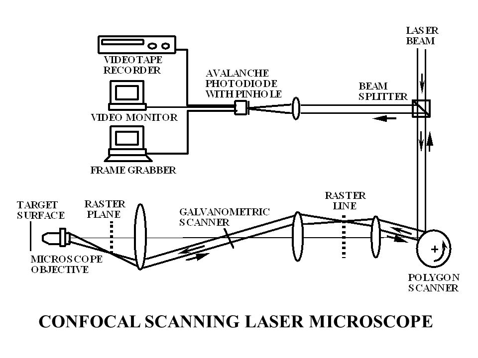 CONFOCAL SCANNING LASER MICROSCOPE