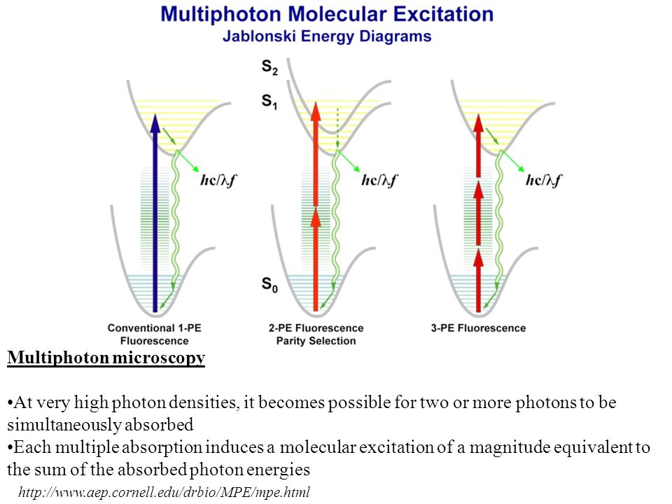 http://www.aep.cornell.edu/drbio/MPE/mpe.html Multiphoton microscopy At very high photon densities, it becomes possible for two or more photons to be simultaneously absorbed Each multiple absorption induces a molecular excitation of a magnitude equivalent to the sum of the absorbed photon energies