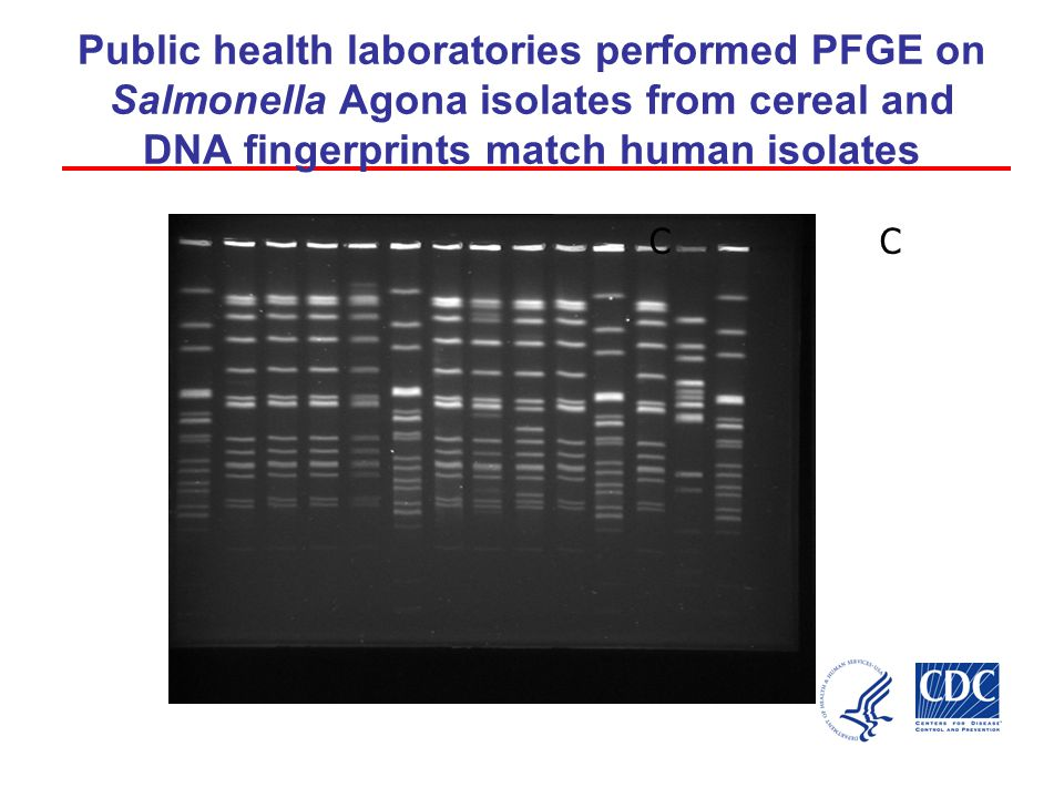 Public health laboratories performed PFGE on Salmonella Agona isolates from cereal and DNA fingerprints match human isolates CC