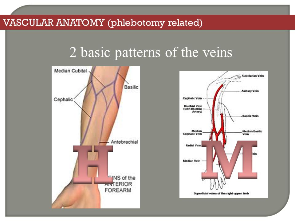 VASCULAR ANATOMY (phlebotomy related) 2 basic patterns of the veins