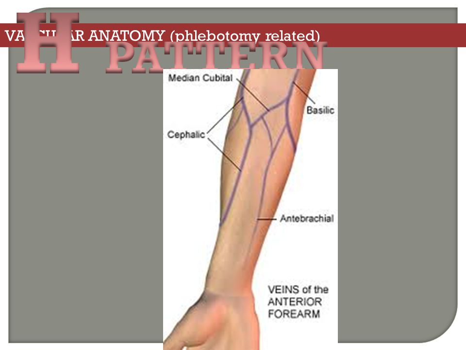 VASCULAR ANATOMY (phlebotomy related)