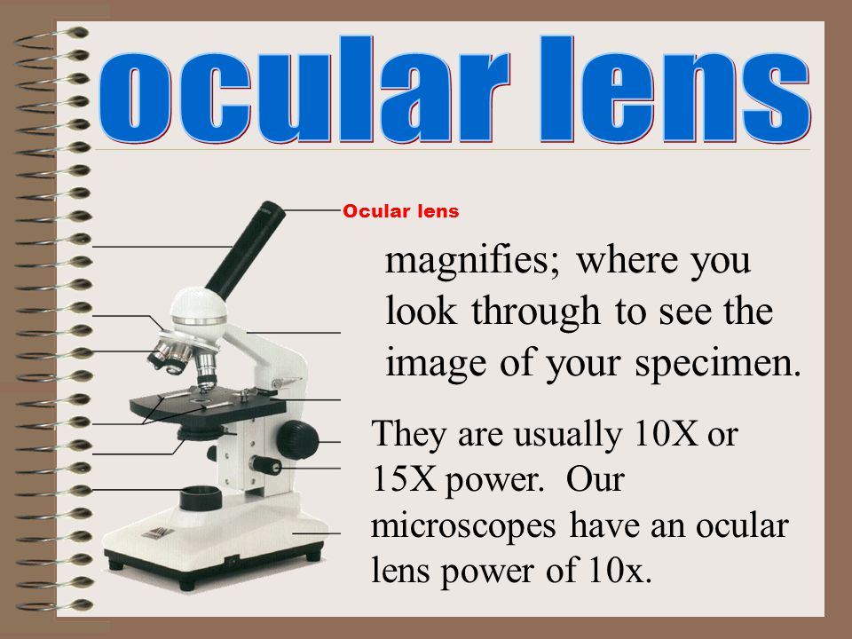 Ocular lens magnifies; where you look through to see the image of your specimen. They are usually 10X or 15X power. Our microscopes have an ocular len