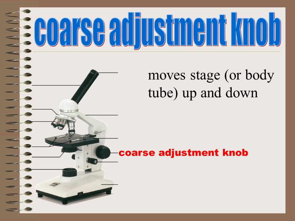 coarse adjustment knob moves stage (or body tube) up and down