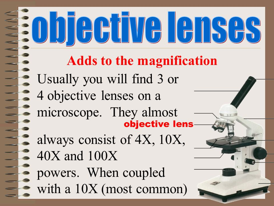 objective lens Adds to the magnification Usually you will find 3 or 4 objective lenses on a microscope. They almost always consist of 4X, 10X, 40X and
