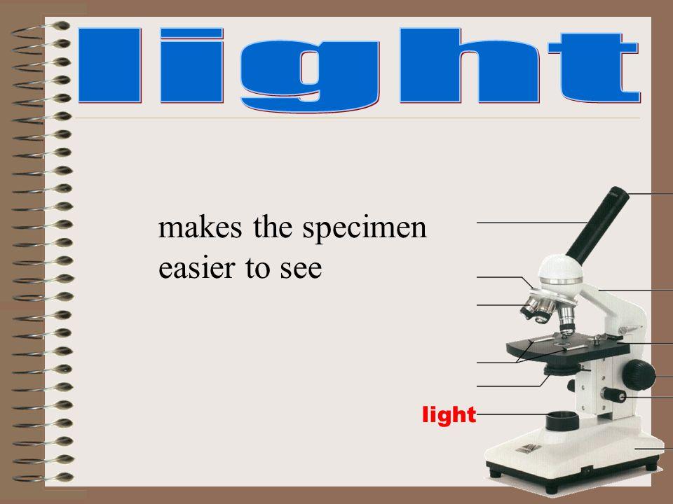light makes the specimen easier to see