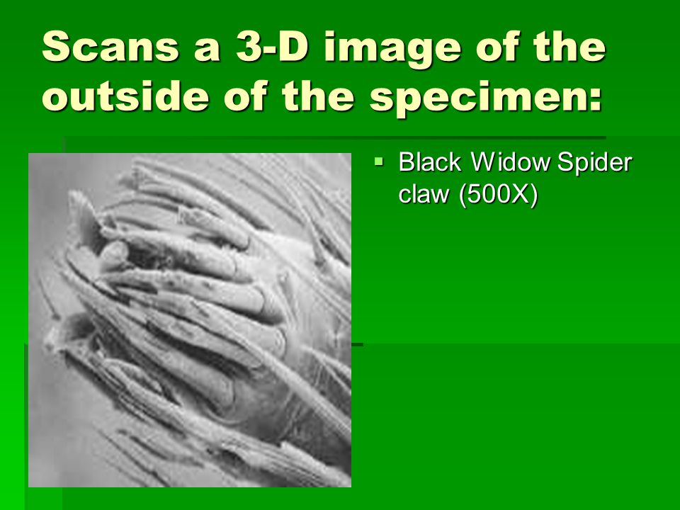 Scans a 3-D image of the outside of the specimen:  Black Widow Spider claw (500X)