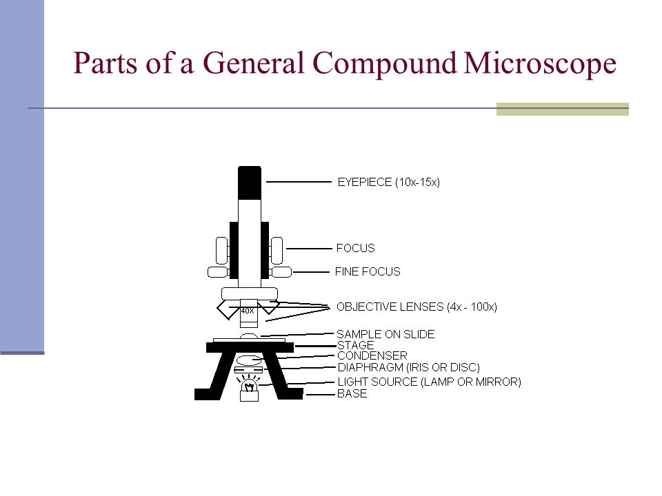 Microscopy Concepts and Practices You Should Know (continued) Always start viewing with the lowest power object lens in position because: - gives greatest field of view making it easier to initially scan slide and find specimen - has greatest working distance making it easier to load slide without damaging it or objective Never use coarse focus knob when a high power objective lens is in position because the coarse knob causes larger amounts of movement when there is an extremely small working distance.