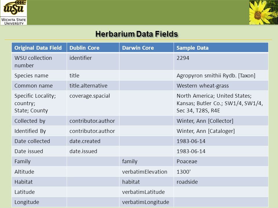 Herbarium Data Fields (Continued) Original data fieldDublin CoreDarwin CoreSample data typeimage subjectPoaceae; Agropyron smithii Rydb.; Western wheat-grass subjectClassificationPASM Introduced/Nativedescription rightsCopyright Wichita State University, 2010 sourceWSU herbarium Identifier.urihttp://library.wichita.edu/techserv /herbarium/browse.asp?id=2294 publisherWichita State University.
